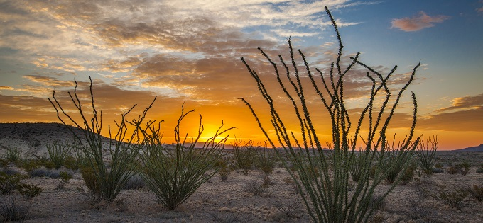 Article-Ocotillos-At-Sunrise-680x315